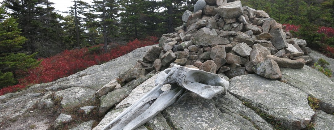 Whale skull atop Mt Champlain